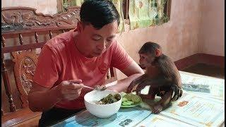 Baby Monkey | A Simple Lunch Of Monkey Doo With Cucumber | Daily Food