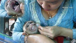Ohh God!! Baby Monkey Dodo Scream Angry When Mom Try To Take Crystal Ball In His Mouth