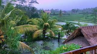 Tropical Rain Sounds with Rolling Thunder in Bali | Thunderstorm Sounds for Relaxing (Sleep Aid)
