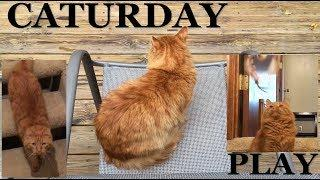 Caturday: Human chores, wet cat food, pets, treats, & playtime!