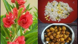 Sunday special lunch menu- sweet corn pulao and baby potato fry | balsam plant in tamil