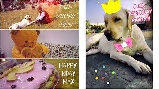 Throwing An Epic 3rd Birthday Party For My Dog!!! {with GIFTS, CAKE and LOTS OF FUN}
