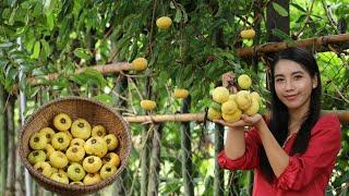 Have you seen this fruit in your homeland - It call gold apple