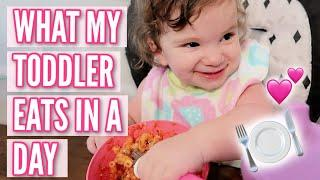 WHAT MY TODDLER EATS IN A DAY 2020 | SIMPLE MEAL IDEAS FOR TWO YEAR OLDS | Ciera Sideri