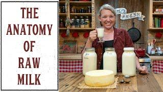 WHAT TO DO WITH RAW MILK ONCE IT'S IN YOUR KITCHEN?