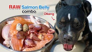 Oliang the Pit Bull eats Salmon Belly combo [ASMR] RAW diet | MUKBANG | 犬が生の肉を食べる | 개는 날 음식을 먹는다 4K