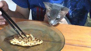 """Japanese food!! """"OKONOMIYAKI"""" Teach kittens. Cats and humans differ in what they eat."""