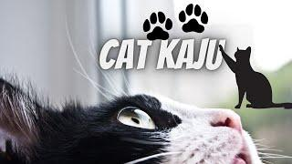 "CUTE LITTLE PUSSY ""KAJU"" - Baby Cats Videos Compilation"