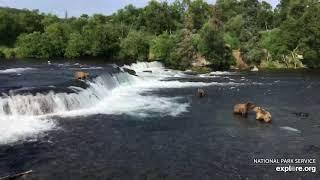 Live Bear Broadcast Booth! - Rangers Naomi & Cheryl go Play by Play at Brooks Falls! July 15th, 2021