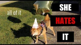 My dogs not so EPIC Birthday Party!!!!