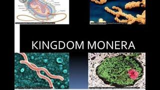 Kingdom -Monera most primitive organism . Biological Classification 2nd chapter of class 11th ncert