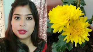 Saraswati puja vlog| Bengali retual basibhat menu with recipe | Hindi vlog | Indian vlogger Swarnali