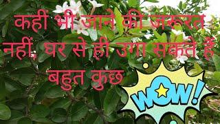Growing method of plants during lock down from home // Easiest way of growing plants