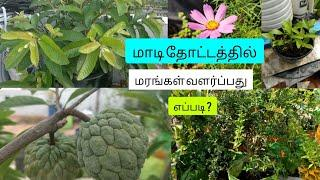 How to grow trees in the terrace garden? | best tree plants to grow | what is a grafted plant? |