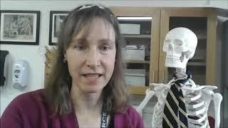 Class Seven Biological Science lesson on the nervous system