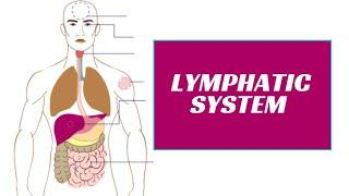 Lymphatic System Part 3