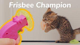Cat Catch Frisbee?! KITTENS vs Frisbee Gun -  Lucky Paws | Day 71 @ Baby Kittens Day 1 to Day 100