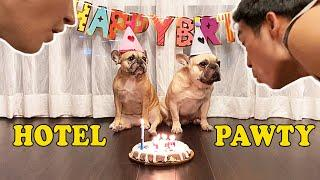 My Dog's Birthday Party At A Fancy Hotel  [With DIY Birthday Cake Recipe]